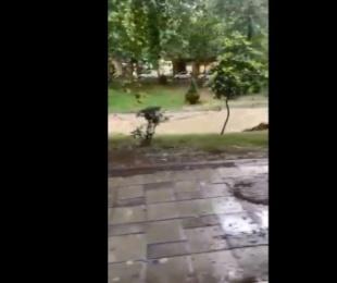 VIDEO/ Reshje të dendura shiu në Tiranë, 'tërbohet' Lana